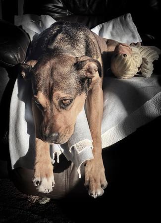 Sad dog days