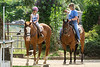 Hilde<br /> <br /> (December 28, 2019) A sad day for the barn, as the horse on the right passed away. She was one of the pillars of the barn's riding and cutting program.