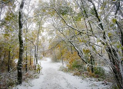Snow & autumn colours