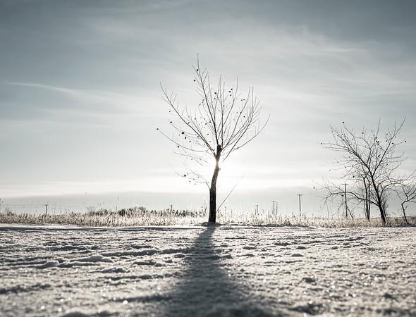 Cold & bleak
