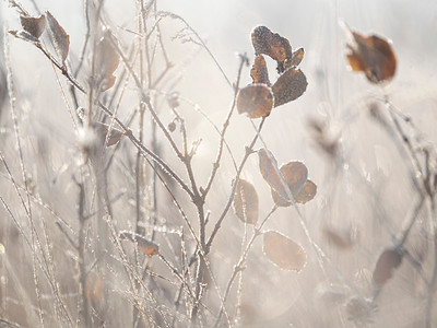 Silvery morning (by janet)