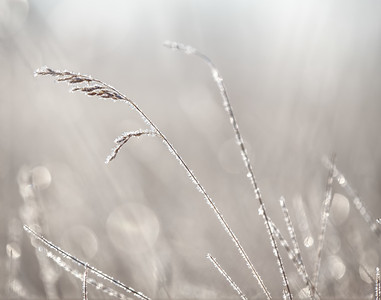 Frosty grass (by Janet)