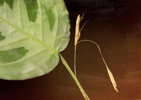 My Prayer Plant