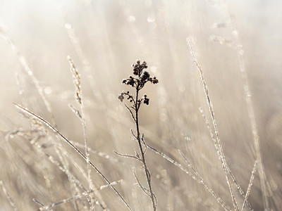 Frost in the Prairie (by Janet)