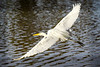 Fly Away<br /> <br /> (March 28, 2020) This egret understands social distancing better than people do.