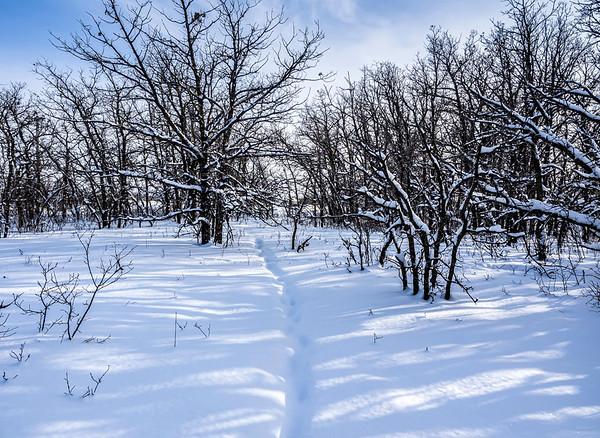 Winter walk by Janet McQ