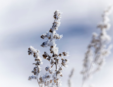 More frost