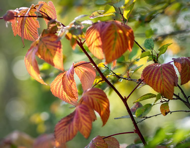 Leaves are turning