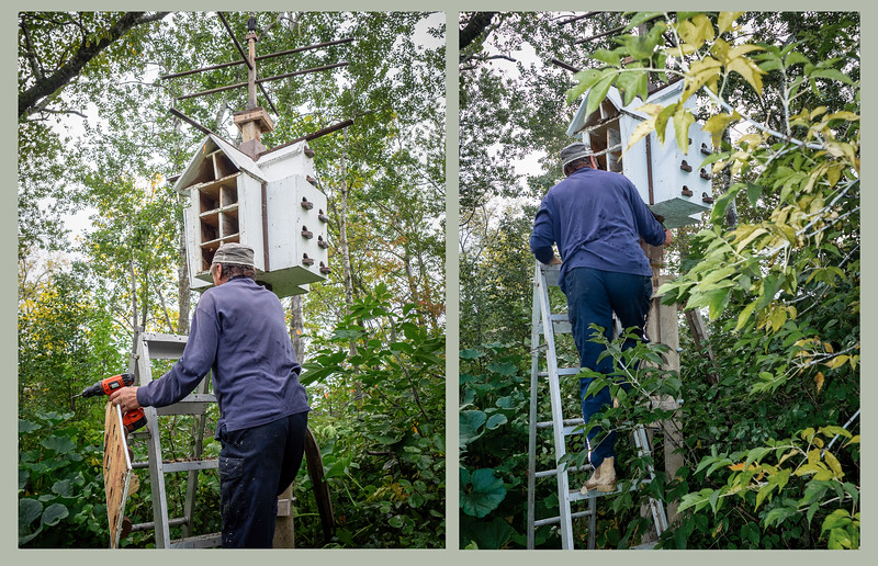 Housecleaning the Purple Martin Grand Hotel