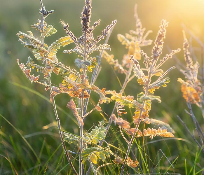 Seeds in autumn light