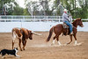 Header and Heeler<br /> <br /> (February 17, 2021) This threesome - cowboy, horse, and dog - are quite a team.