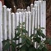 4/13   Fence Friday