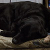 4/4  Levi On His Favorite Bed at Our House