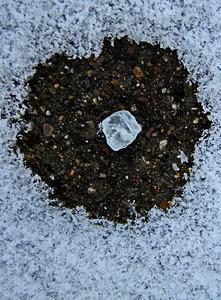 1/29   Salt Crystal