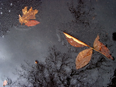 1/24    Puddle Starting To Freeze