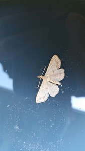 Dead Moth Floating on Waste Paint Bucket