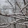 3/6  Heavy Wet Snow