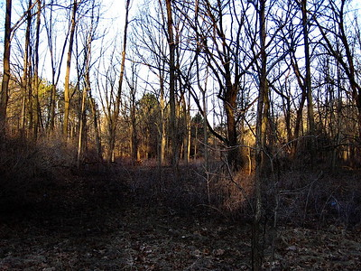 3/4    Morning Sunlight Creeping Down to Forest Floor