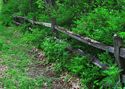 5/18   Overgrown-Fence Friday
