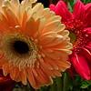 11/16  Birthday Flowers