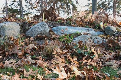 Low Rock Wall