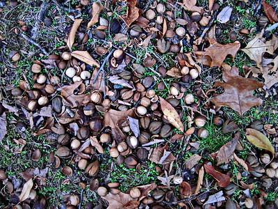 Plethora of Nuts