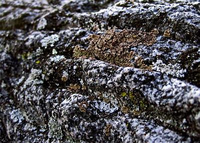 Rocks With Lichen