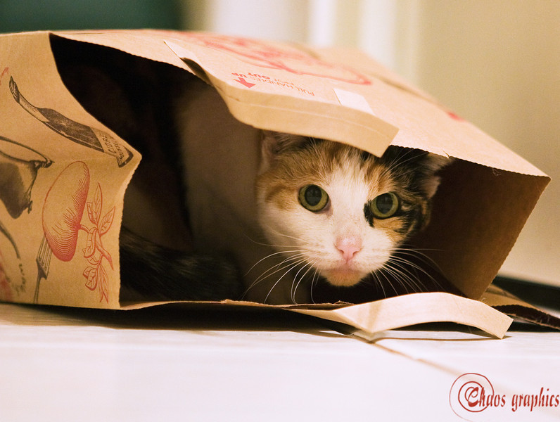 Don't let the cat out of the bag<br /> <br /> (Dec. 13, 2008) It's liable to be dangerous for all involved, particularly the photographer.