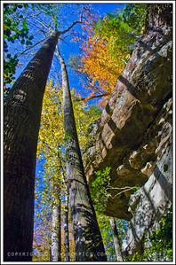 November 10, 2008  Tall, Fall Trees-  Along the Borden Creek Trail, Bankhead National Forest-  Shot with Polarizer Post:  -Fill Light +10