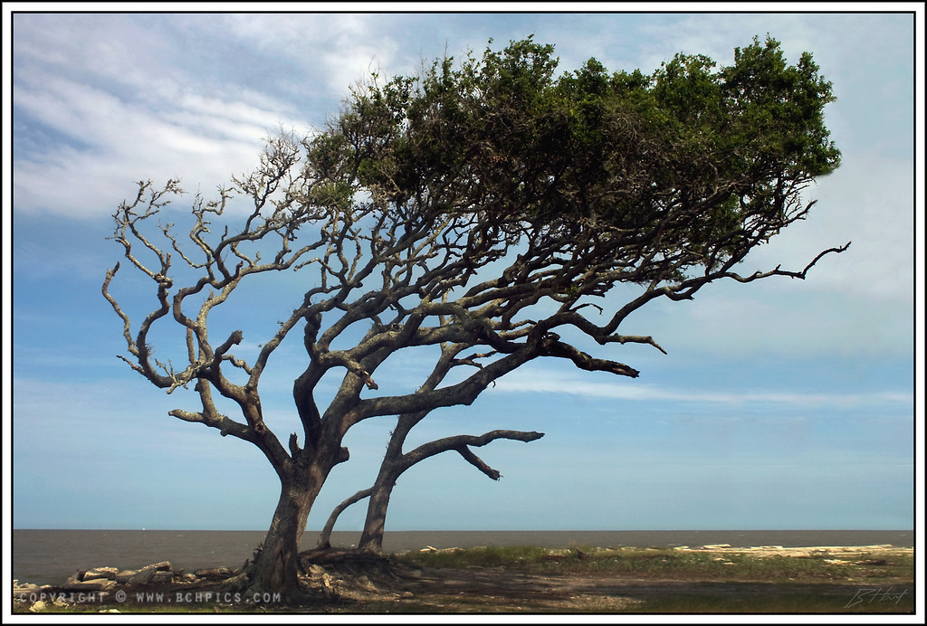 "July 18, 2008  Wind Blown- Jekyll Island, GA  Post: -Rotated ~1.9deg + Crop -Removed a tree to the right of this one -""Created"" the lower right section of land -Levels adjustment -Cloned a head poking out from behind the tree  Edit: Here is the <a href=""http://brianhart.smugmug.com/gallery/4365716_4jdfq/1/335098210_HqM5f"">original source</a>."