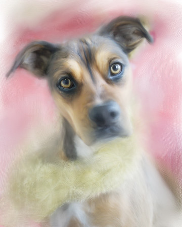 My first dog portrait painting... of my cute little Shelby, of course!
