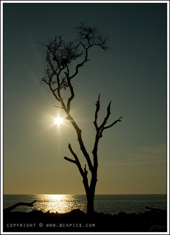 "July 2, 2008<br /> <br /> Early Morning Silhouette-<br /> Driftwood Beach / Jekyll Island, GA<br /> <br /> Post:<br /> -Rotate 1 deg<br /> -Black Point + 10<br /> -White balance to ""Sunny""<br /> -Unsharp Mask 80/4/10<br /> <br />"