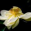 Lotus<br /> MOBOT<br /> CCI