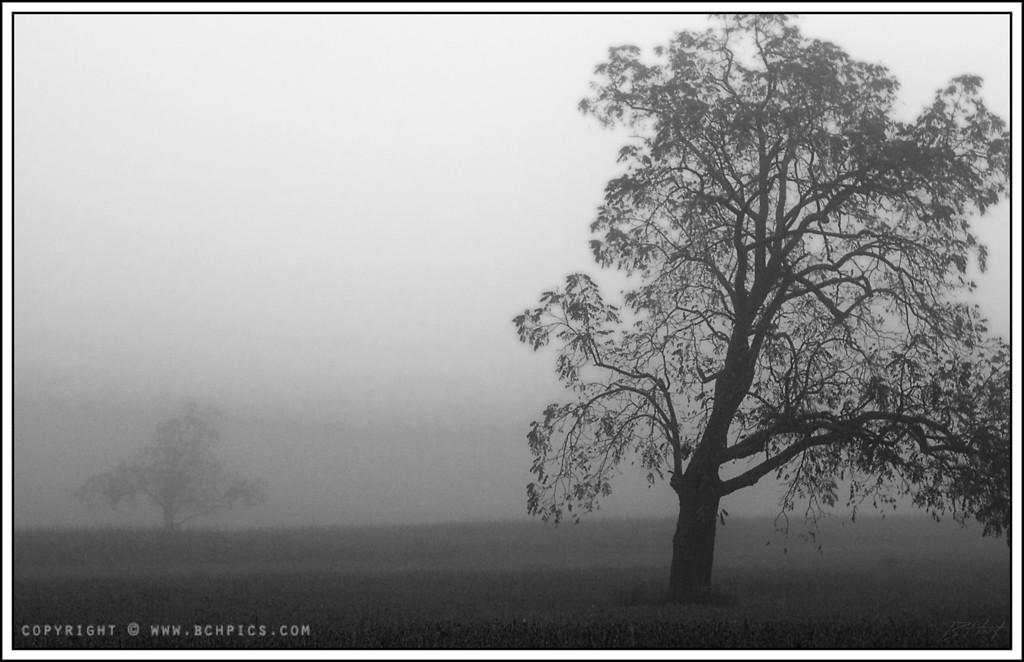 October 1, 2008<br /> <br /> Some trees in the fog...<br /> <br /> Post:<br /> -Contrast +5<br /> -Diffuse Glow (20%)
