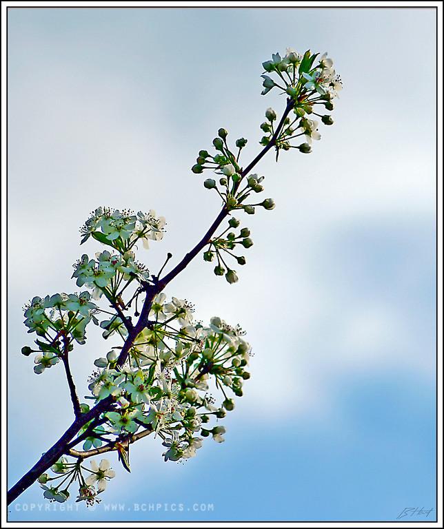 March 15, 2008<br /> <br /> Spring is Springing-