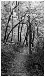 November 11, 2008  Borden Creek Trail Bankhead National Forest