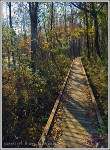 November 27, 2008  Bluff Lake Boardwalk Noxubee Wildlife Refuge, MS