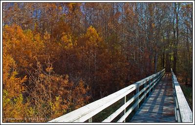 November 25, 2008  The Last of Fall- Noxubee Wildlife Refuge, MS