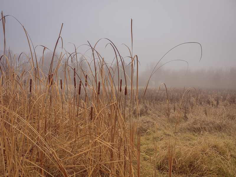 Bullrushes... the final act