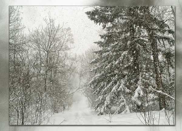 The dog walk in the storm...  You'll notice that there is no dog. That's because he turned around after 10 minutes & headed for home! Smart guy... yesterday was a great day to stay indoors!  01.29.11
