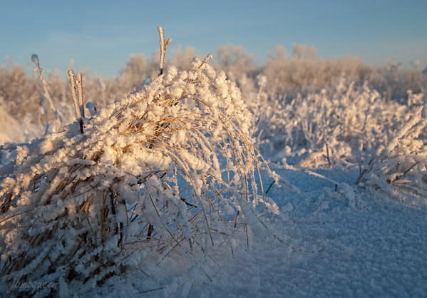 Early morning sun brushes across the Prairie grasses... 02.18.12
