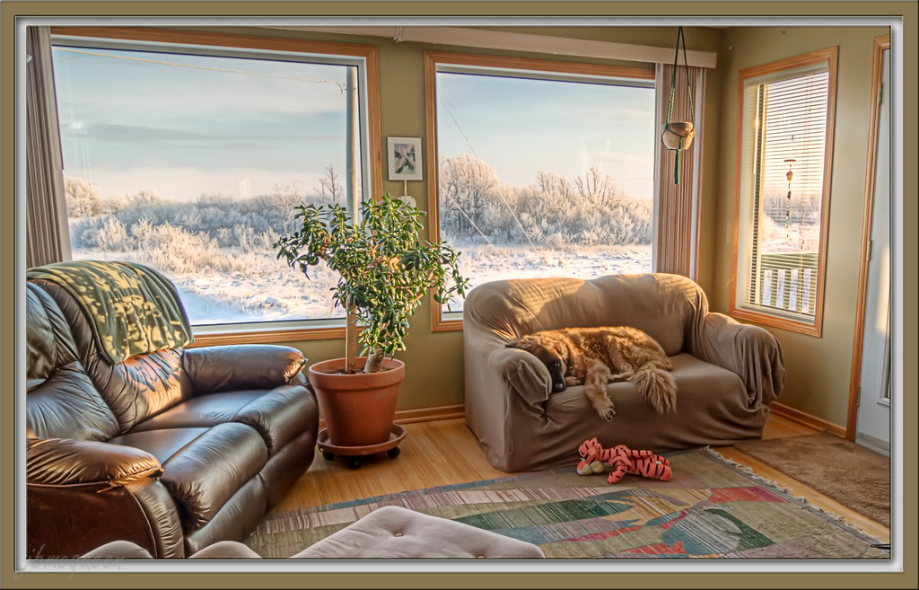 The view from here ... As you can see, Bruno is thoroughly enjoying the lovely view out the window...:-)) this is another HDR shot, which is best viewed in really small sizes as it really didn't 'melt' together very well!  We're in the deep freeze here which makes it so very difficult to use the camera outside - not only do fingers freeze, but also batteries & memory cards - so, it's going to be challenging to find my daily shot in the warmth!   I am totally stunned by your reaction to my 'Lavender' shot yesterday...!  It is such an honour to reach the #1 spot in this community of incredibly talented photographers, thank you so very much! Hope you are enjoying wonderful (warm) weather & a lovely Sunday....:-)) 12.12.10