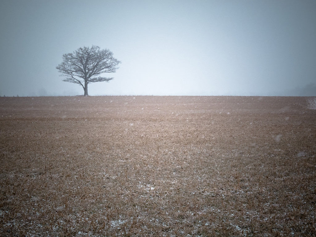 I am just a tree on at the end of the field. I wish that I could not be alone.
