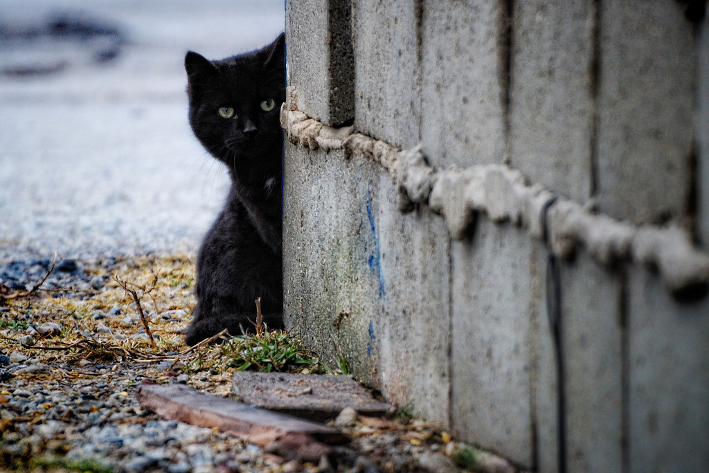 Hide & Seek - Little black cat was fitting well with the gray, rainy day. There are lots of cats hanging around in town but I am still looking for cat woman. Have a great day - JY