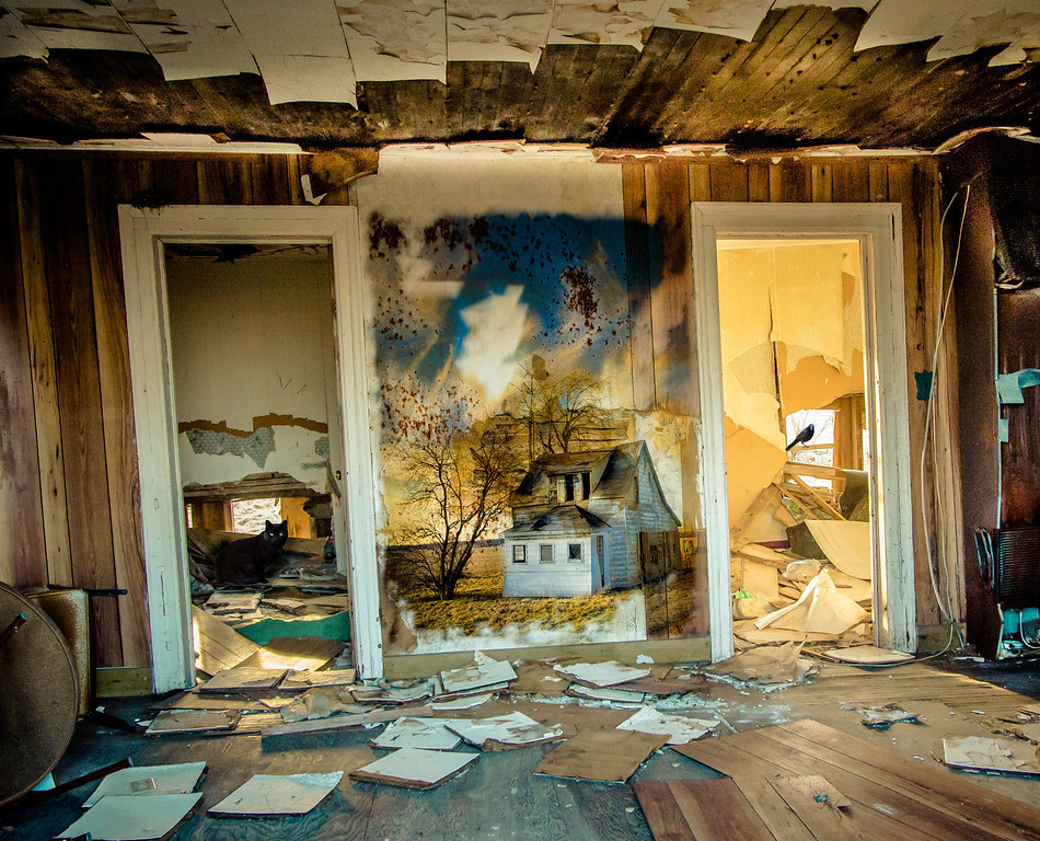 A house, torn wallpaper and its visitors.