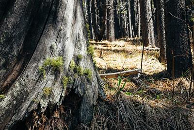 Moss in the prairie