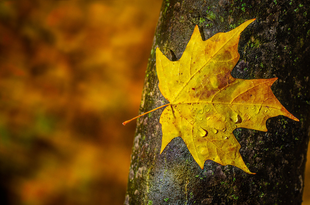 The rain came first, the wind blew the leaf then it rained again.