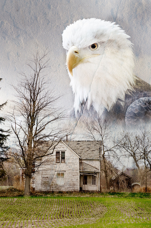 Nature is taking over, the bald eagle are coming back in the area, not common as of yet, but growing !