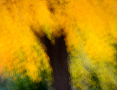 When autumn wind goes running It does some magic things. It gives the shadows dancing shoes It gives the bright leaves wings When autumn wind goes running  It curls the bonfire's tail of smoke And shares a little whispered joke With cornstalks who delight to prattle It turns a seed pod into a rattle When autumn wind goes running