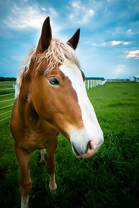 I love horses, be sure it will come to say hello, always.